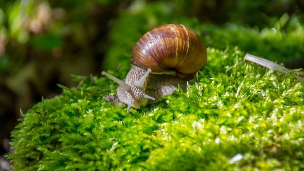types of snails
