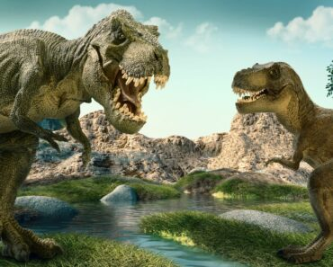 10 Different Types of Dinosaurs