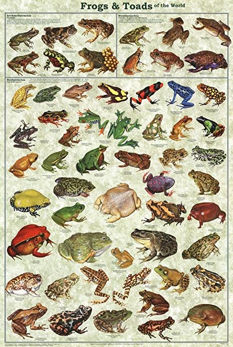 toad identification chart